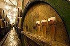 Pilsen Urquell, brewery