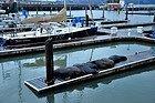 Fisherman's Wharf, leones marinos