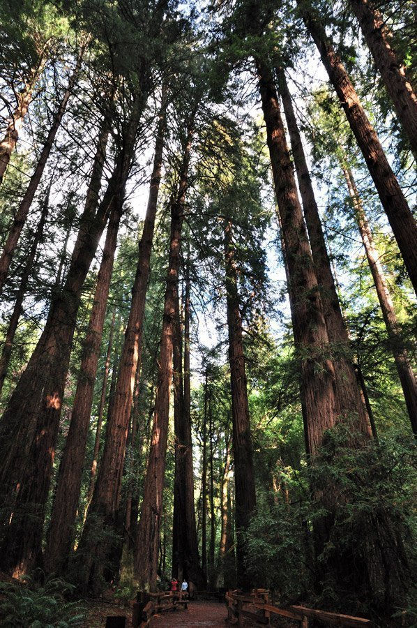 muir-woods-secuoyas-gigantes San Francisco Cable Car Map Routes Times on san francisco bay united states map, golden gate bridge route map, san francisco city sightseeing map, cable car stop map, san francisco f. line map, san francisco caltrain station map, san francisco sfo airport terminal map, san francisco trolley map, san francisco airport transportation, san francisco cali on map, union square san francisco map, san francisco bart map, streets of san francisco map, san francisco trolley route, san francisco bike share, lombard street san francisco map, market street san francisco map, san francisco bus route planner, san francisco map usa,