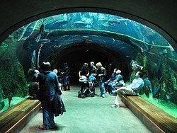 Academia de las Ciencias, acuario