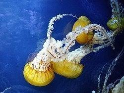Acuario de la Bahia, medusas