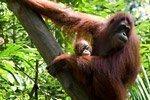 Excursión al Zoo de Singapur