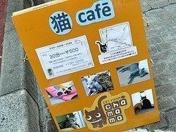 Bar con gatos para acariciar