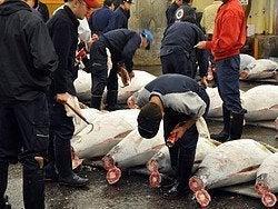Mercado de Tsukiji, subasta atunes
