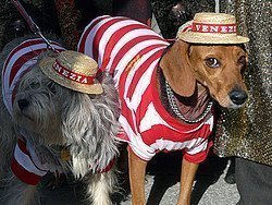 Dogs dressed up as gondoliers
