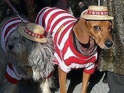 Perros disfrazados de gondoleros