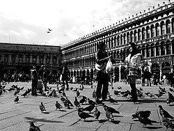 Pigeons in Piazza San Marco