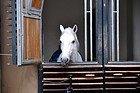 Escuela Española de Equitación de Viena