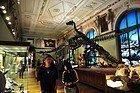 Museo di Storia Naturale, dinosauri