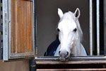 Scuola Spagnola d'Equitazione