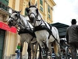 Coche de caballos Fiaker