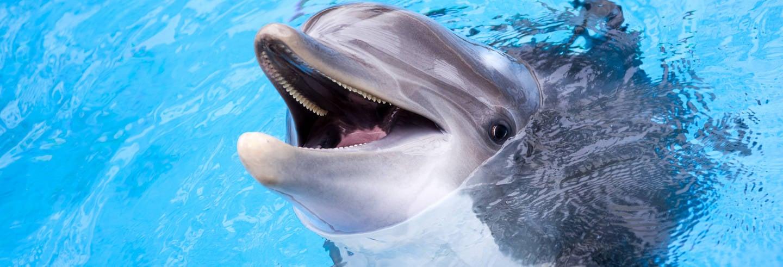 Nuotata con i delfini a Roatán