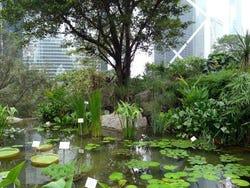 Recorriendo hong kong im genes y fotos de hong kong for Jardin hong kong
