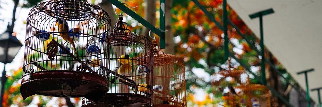Mercado de los Pájaros de Hong Kong