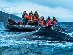 Avisando una ballena