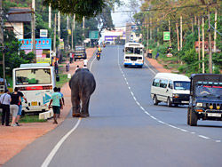 Los elefantes también utlizan la carretera