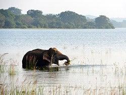 Elefante disfrutando del baño