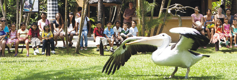 Entrada a Bali Bird Park