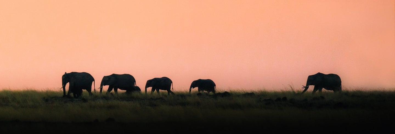 Safari nocturno y cena en Elephant Safari Park