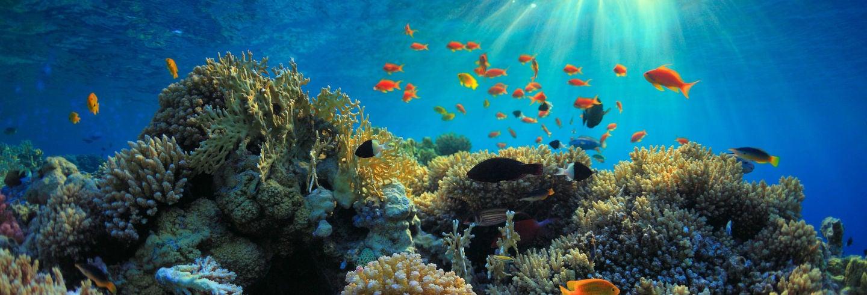 Snorkeling a Bali