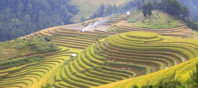 Tour en bicicleta por los campos de arroz