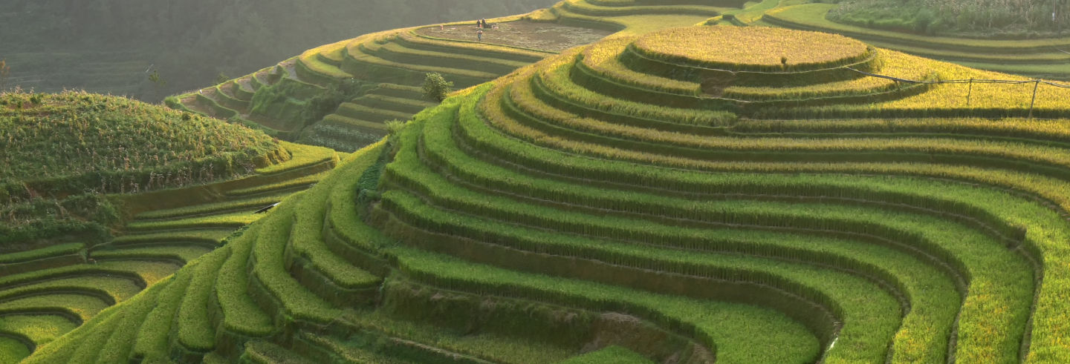 Balade à vélo dans les rizières