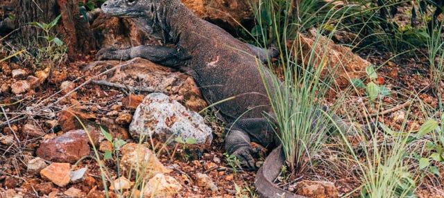 Tour de 2 días por las islas del dragón de Komodo