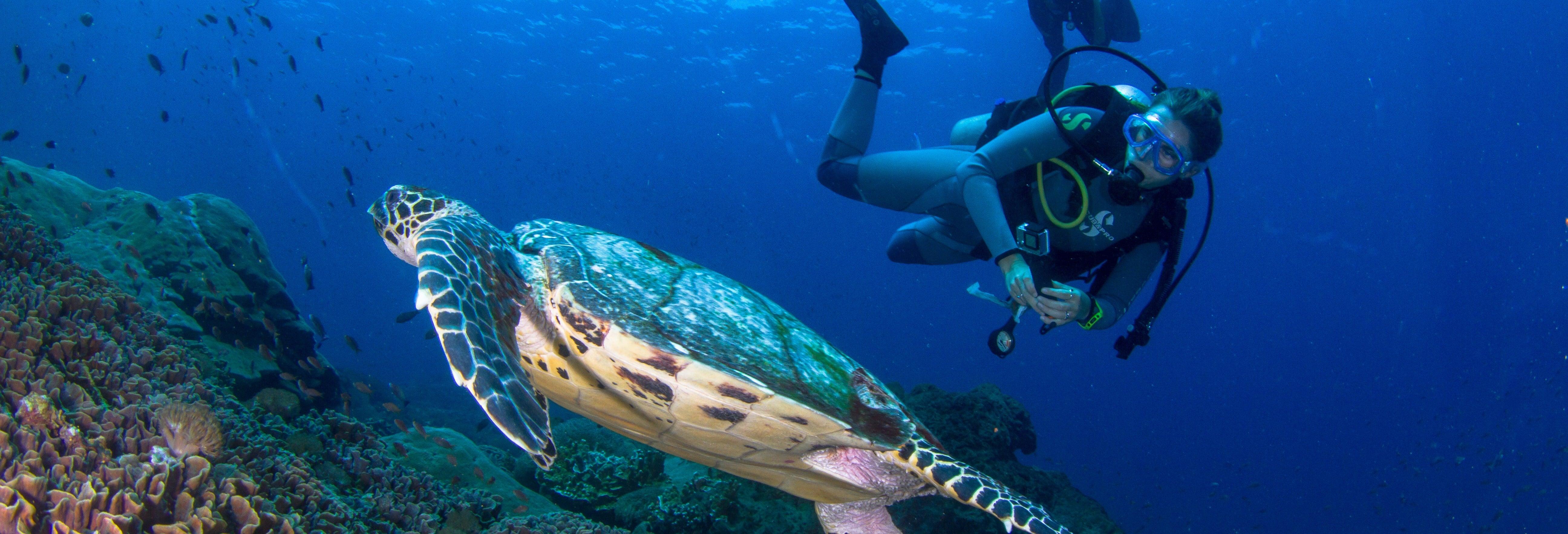 Curso PADI Discover Scuba Diving