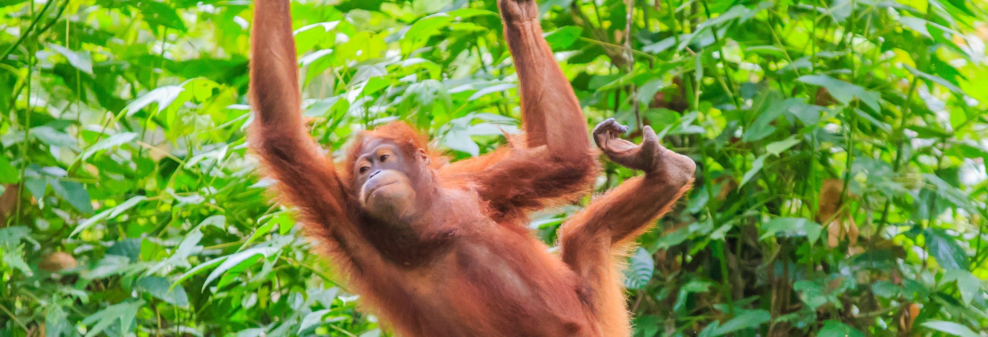 Borneo Cruise and Orangutan Sighting