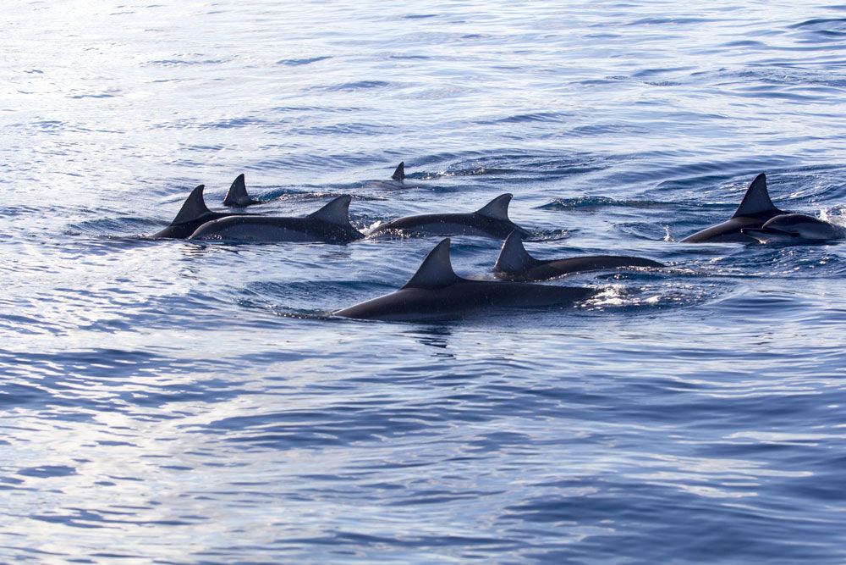 Nuotare con i delfini il sogno e la dura realtà a confronto