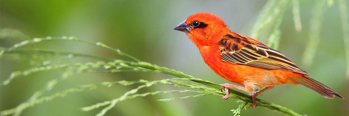 Flora e fauna das Ilhas Maurício