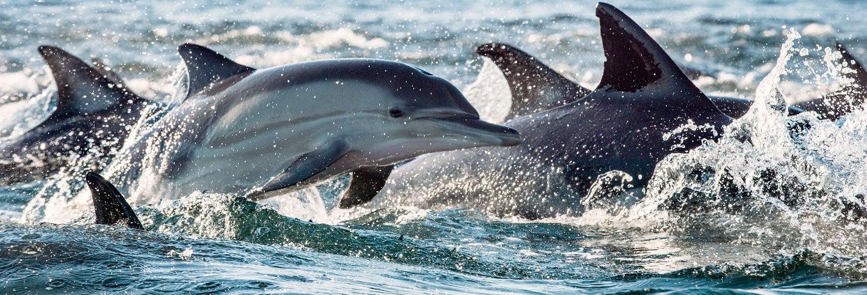 Nado con delfines en Río Negro