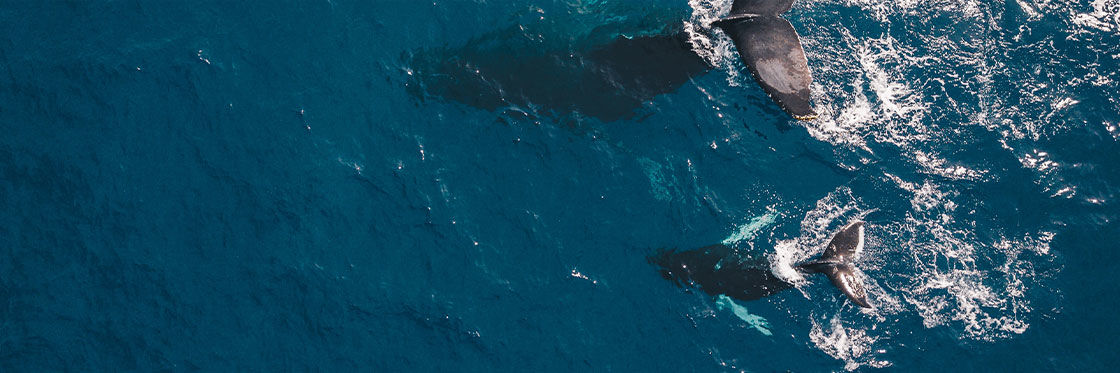 Avistamento de baleias na Islândia