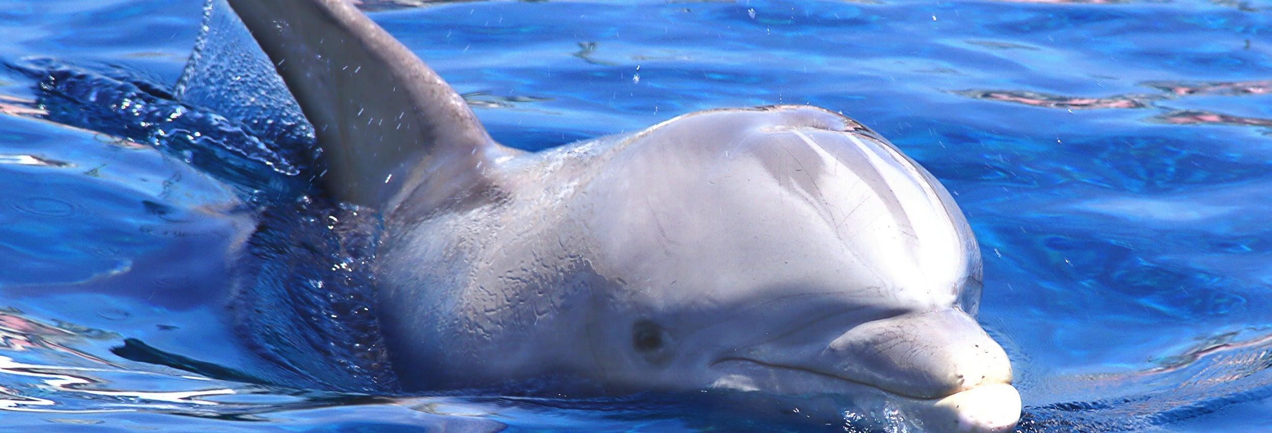 Avistamento de golfinhos e baleias
