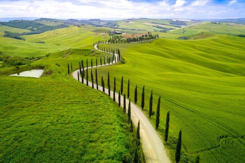 ,Tour por Siena,Excursión a Chianti