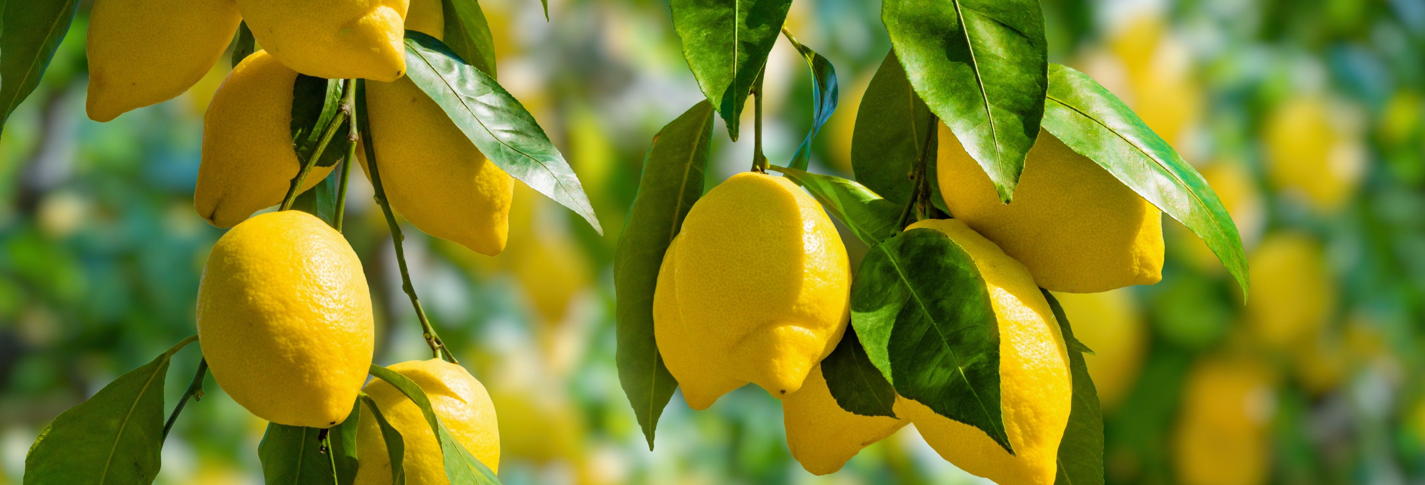 Tour del limone