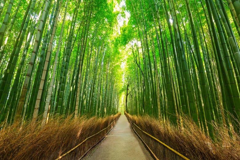 ,Excursión a Arashiyama