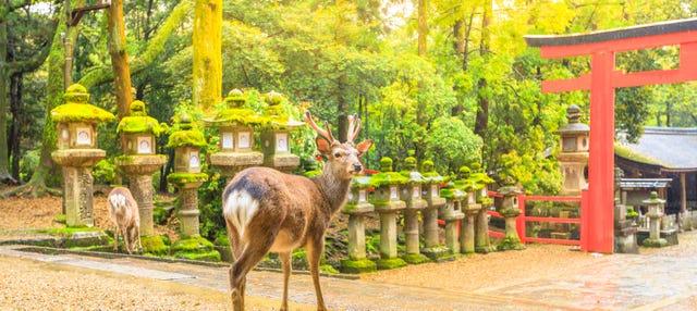 Excursión a Nara