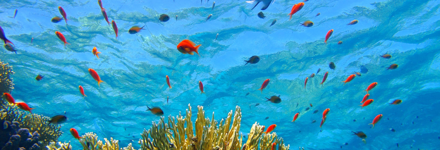 Red Sea Snorkelling Experience