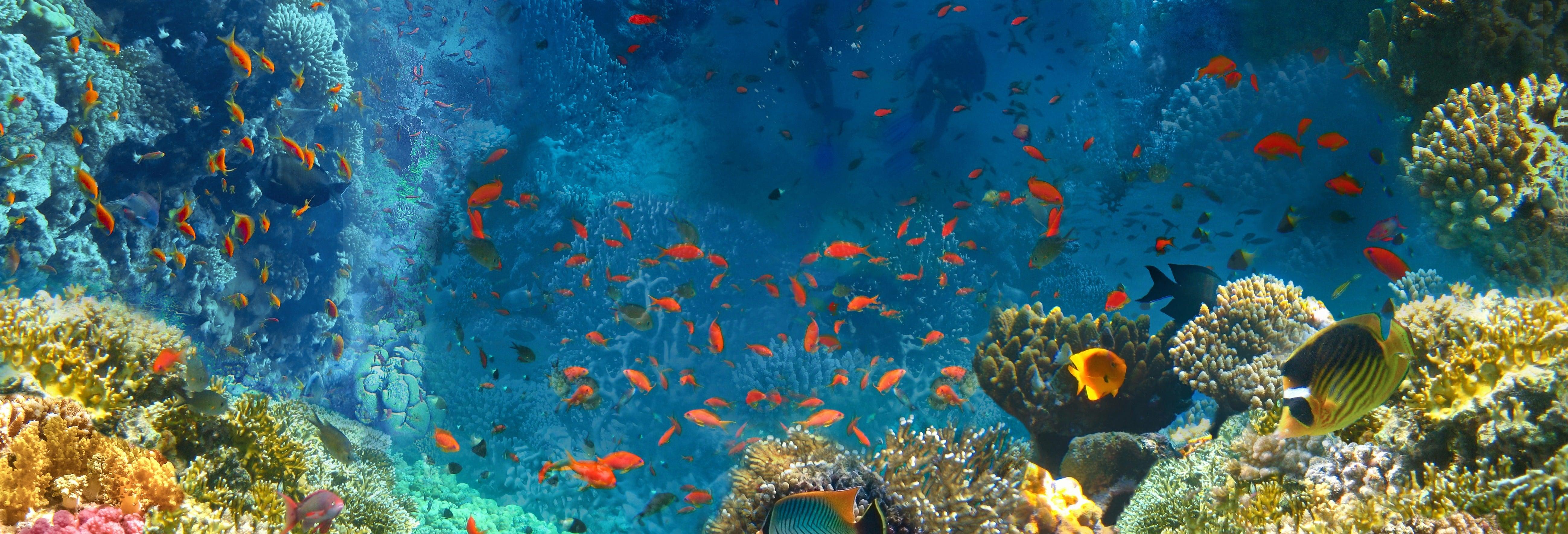 Snorkel no Mar Vermelho