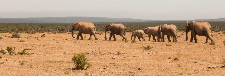 Safari por el Parque Nacional de Tsavo East