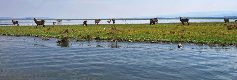 Excursion au lac Naivasha