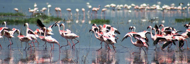 Excursão ao lago Nakuru