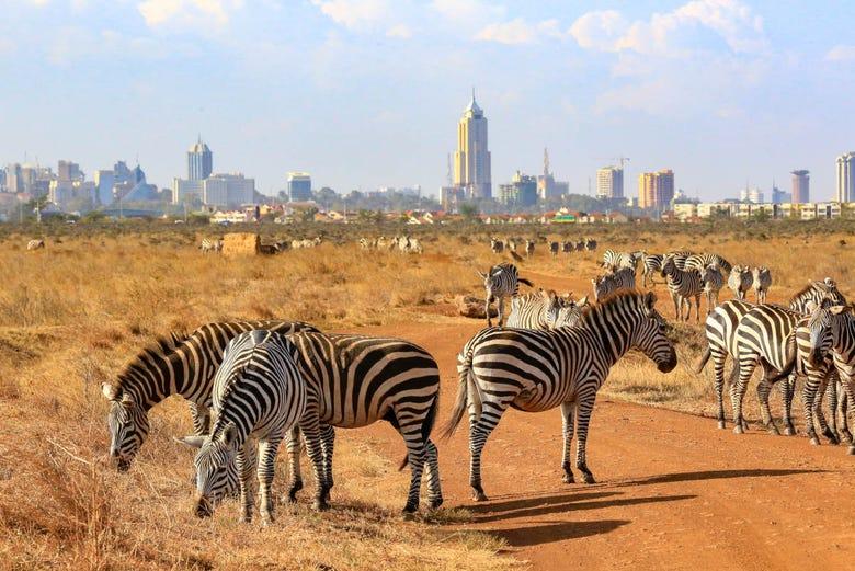"""Résultat de recherche d'images pour """"Parc national de Nairobi"""""""""""