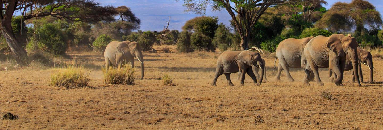 Safari dans le parc national d'Amboseli
