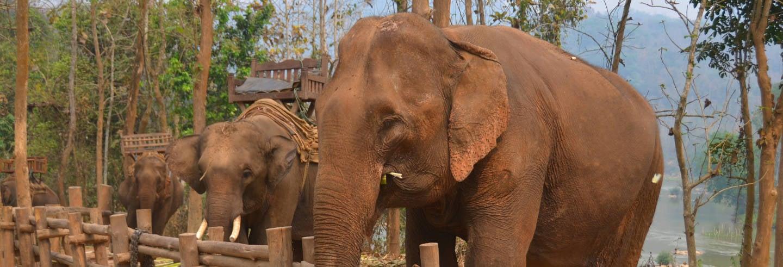Oasi degli elefanti, grotte di Pak Ou e fiume Mekong