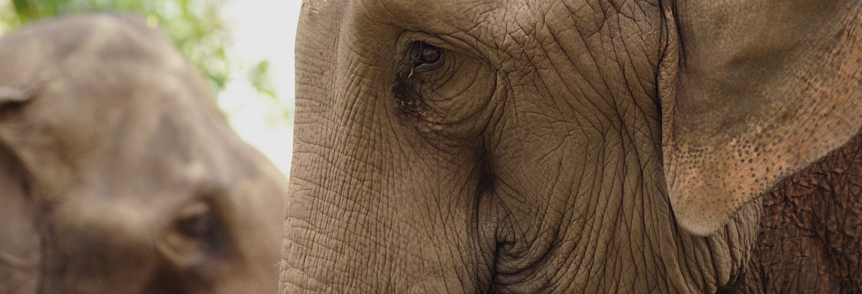 Escursione: santuario degli elefanti e Grotte di Batu