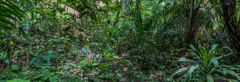 Excursion dans la forêt tropicale de Kuala Lumpur