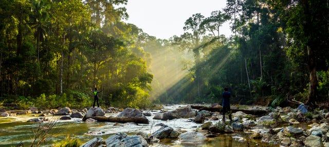 Excursión a la selva Taman Negara