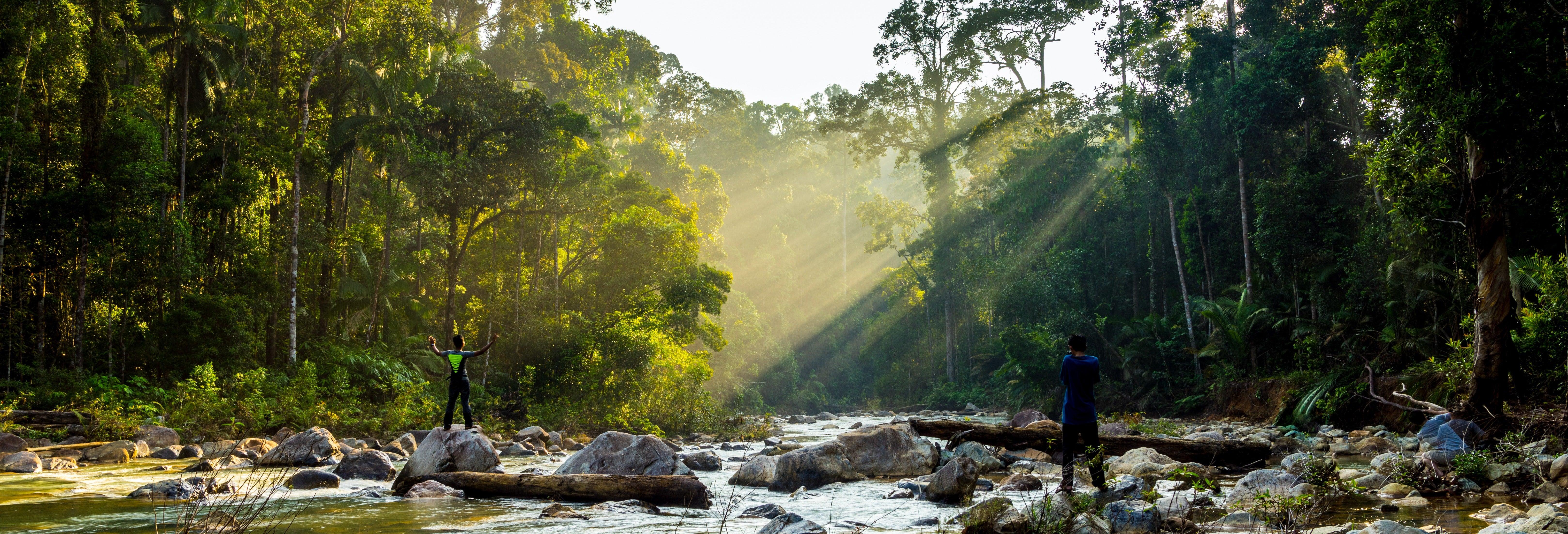 Excursão à floresta Taman Negara